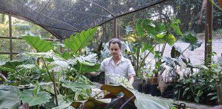 Rufino observa seus espécimes de Araceae