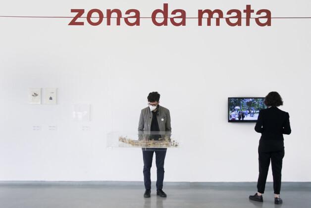 Foto horizontal, colorida. Vista da exposição ZONA DA MATA no MAM São Paulo. Ao fundo, uma parede branca e sobre ela, em letras vermelhas minúsculas, lê-se ZONA DA MATA. Um risco horizontal atravessa a palavra ao meio. Em primeiro plano, logo abaixo do escrito, um visitante contempla uma obra, exposta em um pequeno aquário de vido retangular. A obra se assemelha a vegetação, mas não é possível percebê-la em detalhes. Ao lado, outro visitante assiste ao vídeo que passa em uma pequena tela, acoplada a parede do fundo.